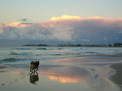 DOG TRACKS. (vince.1 mill views.thanks friends.) Tags: 1001nights soe thegalaxy 1001nightsmagiccity mygearandme mygearandmepremium flickrstruereflection7 vigilantphotographersunite goldcoastqueenslandaustraliadogclouds stormbeachtracks