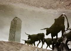 Dallas (rui felix) Tags: sculpture reflection tower art water cow us dallas sand texas