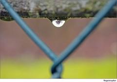 Regentropfen (to.wi) Tags: rain waterdrop drop makro regen raindrop wassertropfen tropfen macr regentropfen einfach simpel simpl towi