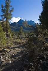 Trails, Mt. Charleston Wilderness Area, Nevada (dkjphoto) Tags: wild cactus usa mountain plant ski west tree america landscape scenery unitedstates desert lasvegas joshua nevada joshuatree peak hike charleston trail northamerica recreation wilderness mtcharleston yucca rugged yuccabrevifolia mountcharleston springmountains charlestonpeak yuccapalm denniskjohnson