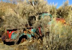 JKN©-BW-1130 (John Nakata) Tags: abandoned belmont brush bush camouflage ghosttown gmc100 hide miningtown nv overgrown truck