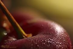 Colorful Bokeh (s@mar) Tags: cherries colorful bokeh