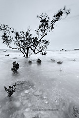 (Louise Denton) Tags: ocean longexposure sea portrait blackandwhite motion tree beach water rain weather movement sand rocks conversion wind cloudy nt overcast australia darwin mangrove monsoon northernterritory mindilbeach littletrees bwbw minitrees