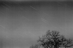 Geminid Star Trails (Amber Redfield) Tags: trees sky blackandwhite tree film nature monochrome night 35mm canon stars shower photography skies kodak space trails 400tx astrophotography orion astronomy canonae1 showers constellations cosmos meteor constellation startrails meteors geminids trix400 geminid meteorshower geminidmeteorshower amberredfield