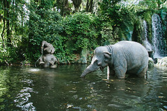 Splashing Elephants (whereismouse) Tags: disney disneyworld elephants waltdisneyworld magickingdom animatronics thejunglecruise vsco vscofilm