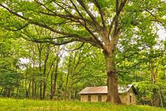 Unexpected Shelter (dlholt) Tags: tree green burlington forest oak shelter shelterhouse burlingtonia dankwardtpark dankwardtmemorialpark