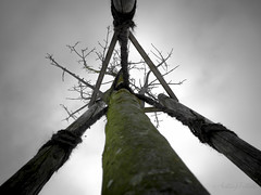 The Patient (Anthony Pallotto Photography) Tags: blue winter sky bw white black color tree green canon germany rope posts tool elph selective thepatient rememberthatmomentlevel1 rememberthatmomentlevel2