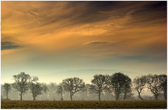 Misty Trees At Dawn (Natasha Bridges) Tags: morning trees mist sunrise dawn shropshire wrekin