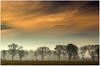 Misty Trees At Dawn (Natasha Bridges) Tags: morning trees mist sunrise dawn shropshire wrekin