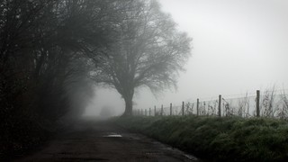 In the Mist | Driveway - 2013-02-27 at 13-18-12