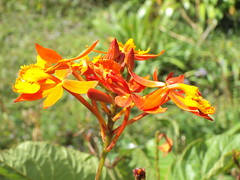 Florecita en Naranja