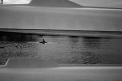 (Jacobo Canady) Tags: río river boats boat sevilla andalucía guadalquivir kayak barca seville andalucia rowing barcas canoa rower remero remando ríoguadalquivir caone