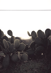 paesaggio toscano con foschia, cactus e cavo elettrico ((Antonio Mariotti)) Tags: life cactus cloud mist make landscape him xpro fuji with things fujifilm once had could theman confidence 18mm tuscan companionship inlife electricalcable xpro1 ineach fujifilmxpro1 andelectricalcable alsoacloud prerotoballismi
