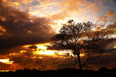 Rooted Purpose (Matt Sarmiento) Tags: sunset tree silhouette long exposure colours bare filters