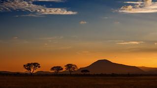 Nella savana, il tramonto