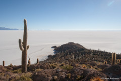 Inca's Island (mortimer?) Tags: cactus inca island desert salt bolivia saline uyuni potosidepartment