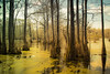Primordial (Sky Noir) Tags: park trees wild nature water photography state north swamp carolina cypress wilderness merchants millpond waterscape primordial merchantsmillpondstatepark skynoir