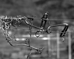 to create tension (enki22) Tags: white abstract black nature chrome minimalism tension monocrome enki22