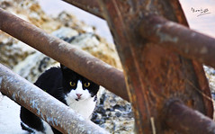 :             ...!!  (Noni Alk) Tags: cat cute        hide hiding   60d baby beach beauty black blackwhite green flickr childhood child iphoneography canon60d camera canon photograph instagram photographer photography kuwait kid love money photo play photoshop usa square seashell romance red q8 playing white   sea   eye eyes watching