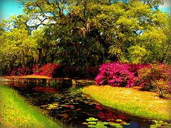Another April photo, It's a cloudy day here in Ohio. (DonaSite) Tags: vacation pool reflecting azaleas southcarolina lilypads brookgreengardens april2009 spanishmossonliveoaktree