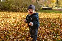 Boy (ThomasKohler) Tags: autumn boy baby cute fall smile leaves laughing fun leaf infant funny child sweet albert laub herbst son kind laugh cuteness lachen junge suess niedlich sohn laubblatt