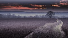 At the edge (Eric Goncalves) Tags: trees winter light sunset sky mist color nature beautiful landscape frozen view dusk perspectives gloucestershire treescape array forestofdean newlife thelonelytree bestcapturesaoi nikond7000 ericgoncalves rememberthatmomentlevel4 rememberthatmomentlevel1 rememberthatmomentlevel2 rememberthatmomentlevel3 ominousskys rememberthatmomentlevel5