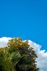 Over here! (3 of 7) (Howard Sandford) Tags: trees sky green leaves clouds bush bluesky negativespace uplifting