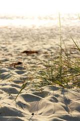 Footstep (Auto-Fokus Fotografie) Tags: zingst sommer ostsee strand horizonte meer balticsea 50mm stm 18 beach fahrn pflanze