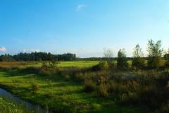 bog grass (f.tyrrell717) Tags: grass green whit bogs sun