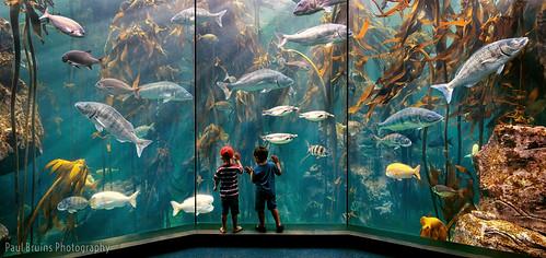 Thumbnail from Two Oceans Aquarium