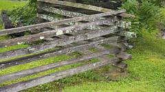 Split-rail Fenceline (wplynn) Tags: splitrail fenceline split rail fence line nashville indiana