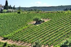 Casa Brunello (al.min) Tags: brunello montalcino wine supertuscan valdorcia vineyard