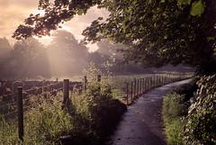 Broughshane Sunrise (fudgefishmono) Tags: 400 leica m7 portra summarit35mm lane path stonewall fence lightandshadow godrays barbedwire analogue