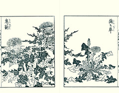 Ghost thistle and dandelion (Japanese Flower and Bird Art) Tags: flower ghost thistle cirsium nipponense asteraceae dandelion taraxacum yasukuni tachibana kano woodblock picture book japan japanese art readercollection