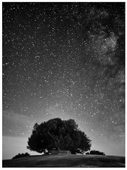 Bolton's Bench (darrencollard) Tags: boltons bench lyndhurst new forest hampshire uk tree stars bw night landmark