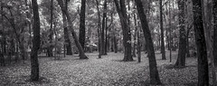 Empty Garden (Serlunar (tks for 5.0 million views)) Tags: ibirapuera serlunar