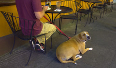 Sidewalk Encounters (swong95765) Tags: dog animal cafe sidewalk guy man table chairs interaction notice awareness streetwalker