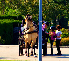 """horse_and_kids • <a style=""""font-size:0.8em;"""" href=""""http://www.flickr.com/photos/97058259@N02/29606963380/"""" target=""""_blank"""">View on Flickr</a>"""