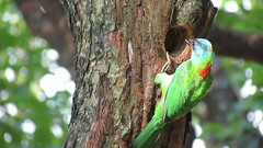 Mr. & Mrs. Barbet (Eva Tc Chang) Tags: barbet  taiwan