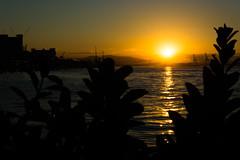 DSC_3181 (sergeysemendyaev) Tags: 2016 rio riodejaneiro brazil paradadosmuseus museum museudoamanha sun sunset scenery landscape dusk beautiful silhouette winter          beauty water reflection   cidadeolimpica