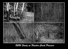 B&W Study at Fletcher Creek Preserve (D J England) Tags: bw ontario hamilton southernontario tych dje hamiltonconservationauthority canoneos7d djengland djenglandphotography douglasjengland canonefs1585f3556 fletchercreekpreserve