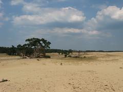 National Park De Hoge Veluwe (I chicchi) Tags: park parco holland nature desert natura olanda deserto nationalparkdehogeveluwe