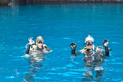 Off for a dive at Middle Arch (tarasutherland) Tags: nikon d300 poorknightsislands nikond300