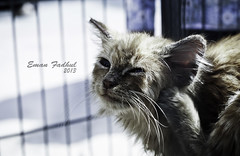 DSC_2201 (e_fadhul) Tags: portrait cat happy bahrain cool nice uae bh ksa البحرين المزرعة حديقة المزارعين