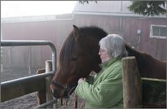 mary-ellen and johny's halter (tesseract33) Tags: world light horses people horse art nikon farms stable nikondigital halter nikond300 tesseract33 peterlangphotography squamishphotographers