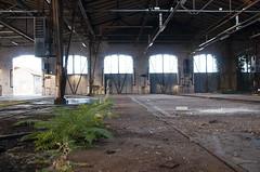 a way out (Ghostwriter D.) Tags: old windows plants abandoned indoor trains repair farn rangierbahnhof d300s sprsinn