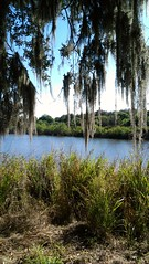 View of lake at Rothenbach Park (Sarasota County) Tags: