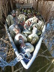 P1000204 (gzammarchi) Tags: lago barca italia natura animale paesaggio ravenna stormo anatra marinaromea piallassa camminata itinerario richiamo piallassabaiona