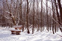 Winterbank im Kermeter IMG_6692 (Jerry Eifel) Tags: winter nrw nationalparkeifel kermeter