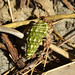 Fauna nel parque nacional Cahuita